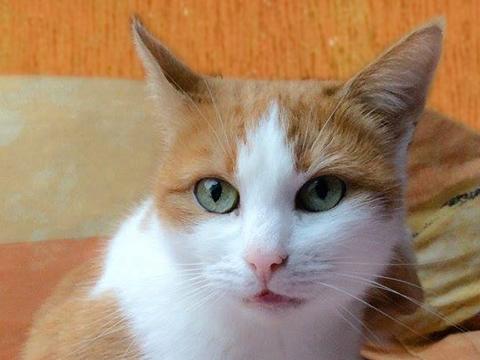 Katze Goldie, Projektmanagerin
