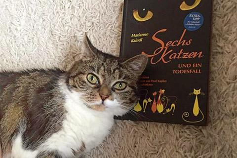 Foto: Paulinchen, die lesende Samtpfote